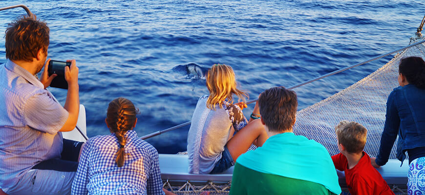 dolphin watching mallorca